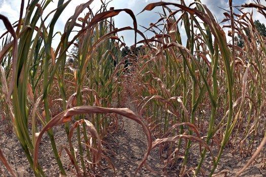 Tegemoetkoming droogtesituatie voor boeren